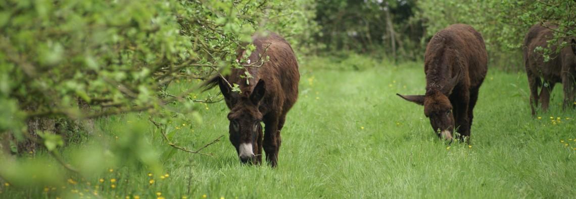 Korrig'âne ferme pédagogique en bretagne
