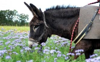 Korrig'âne ferme pédagogique et asinerie en côtes d'armor